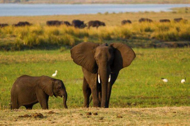 Dry savannah in Tanzania