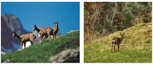 Andorra Animals