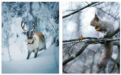 Finland Animals
