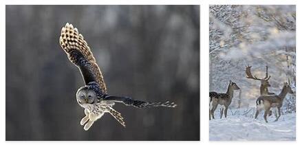 Lithuania Animals