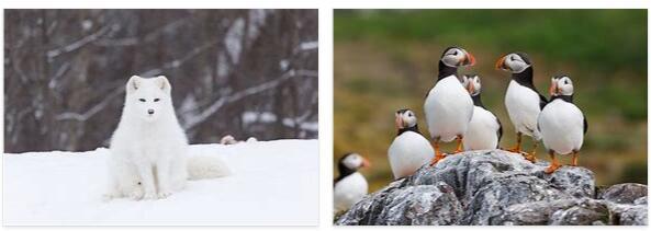 Norway Wildlife