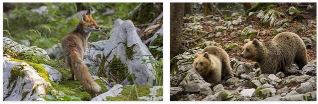 Slovenia Animals
