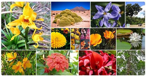 Flora in Argentina