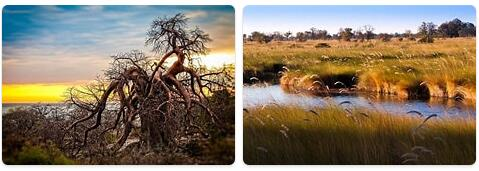 Flora in Botswana