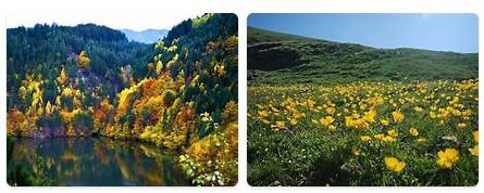 Flora in Bulgaria