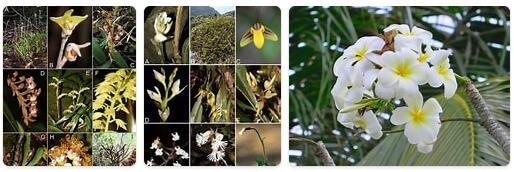 Flora in Cambodia