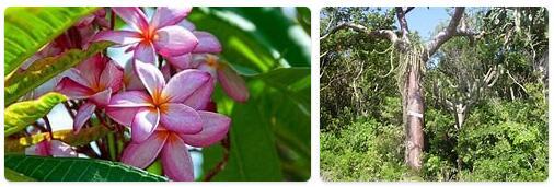 Flora in Cuba