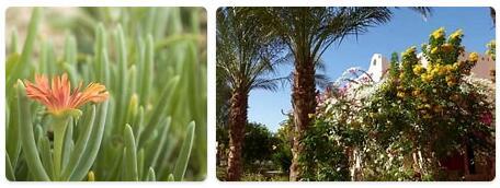 Flora in Egypt
