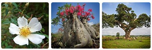 Flora in Ethiopia