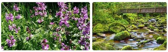Flora in Georgia