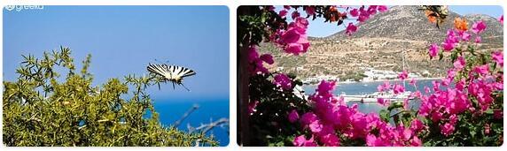 Flora in Greece