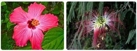 Flora in Honduras
