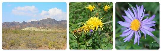 Flora in Kazakhstan