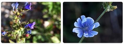 Flora in Kyrgyzstan