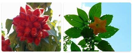 Flora in Laos