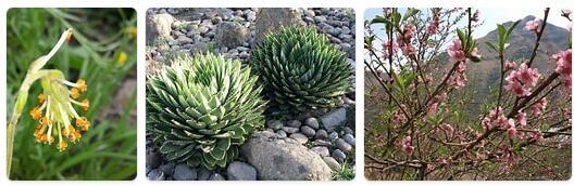 Flora in Lesotho