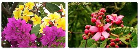 Flora in Madagascar