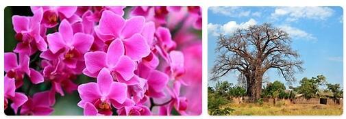 Flora in Malawi