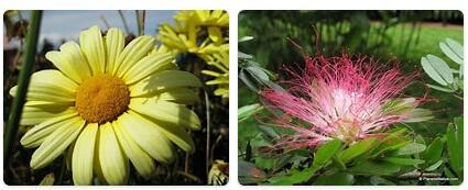 Flora in Peru