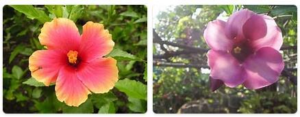 Flora in Philippines