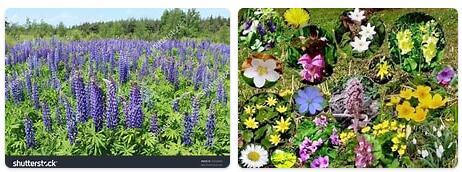 Flora in Poland