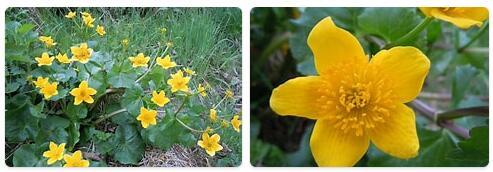 Flora in Romania