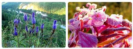 Flora in Russia