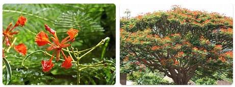 Flora in Senegal