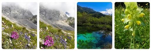 Flora in Slovenia