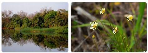 Flora in Sudan