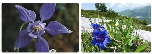 Flora in Switzerland