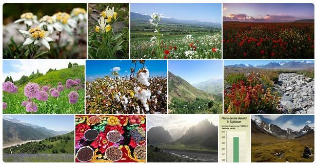 Flora in Tajikistan