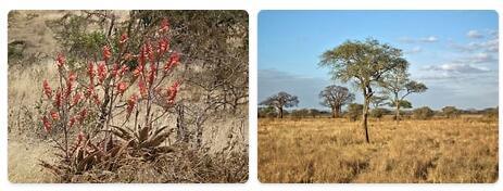Flora in Tanzania