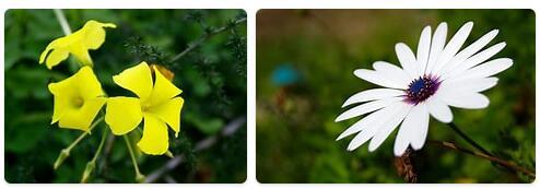 Flora in Tunisia