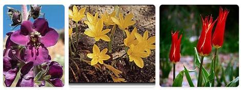 Flora in Turkey