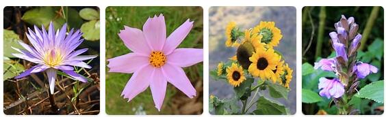 Flora in Uganda