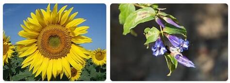 Flora in Ukraine