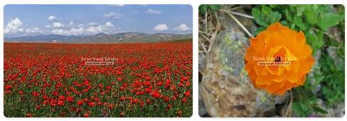 Flora in Uzbekistan