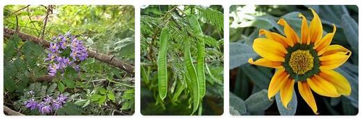 Flora in Zambia