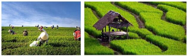 Indonesia Agriculture